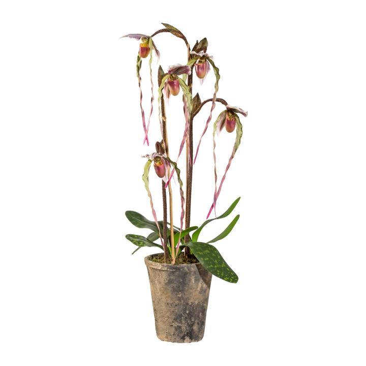 Kunstpflanze Orchidee Frauenschuh, weiß-lila, inkl. Terracotta-Topf ...