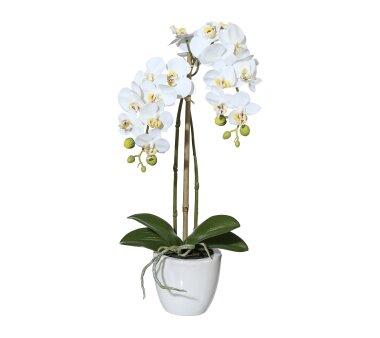 Kunstpflanze Mini-Phalenopsis (Orchidee), Farbe...