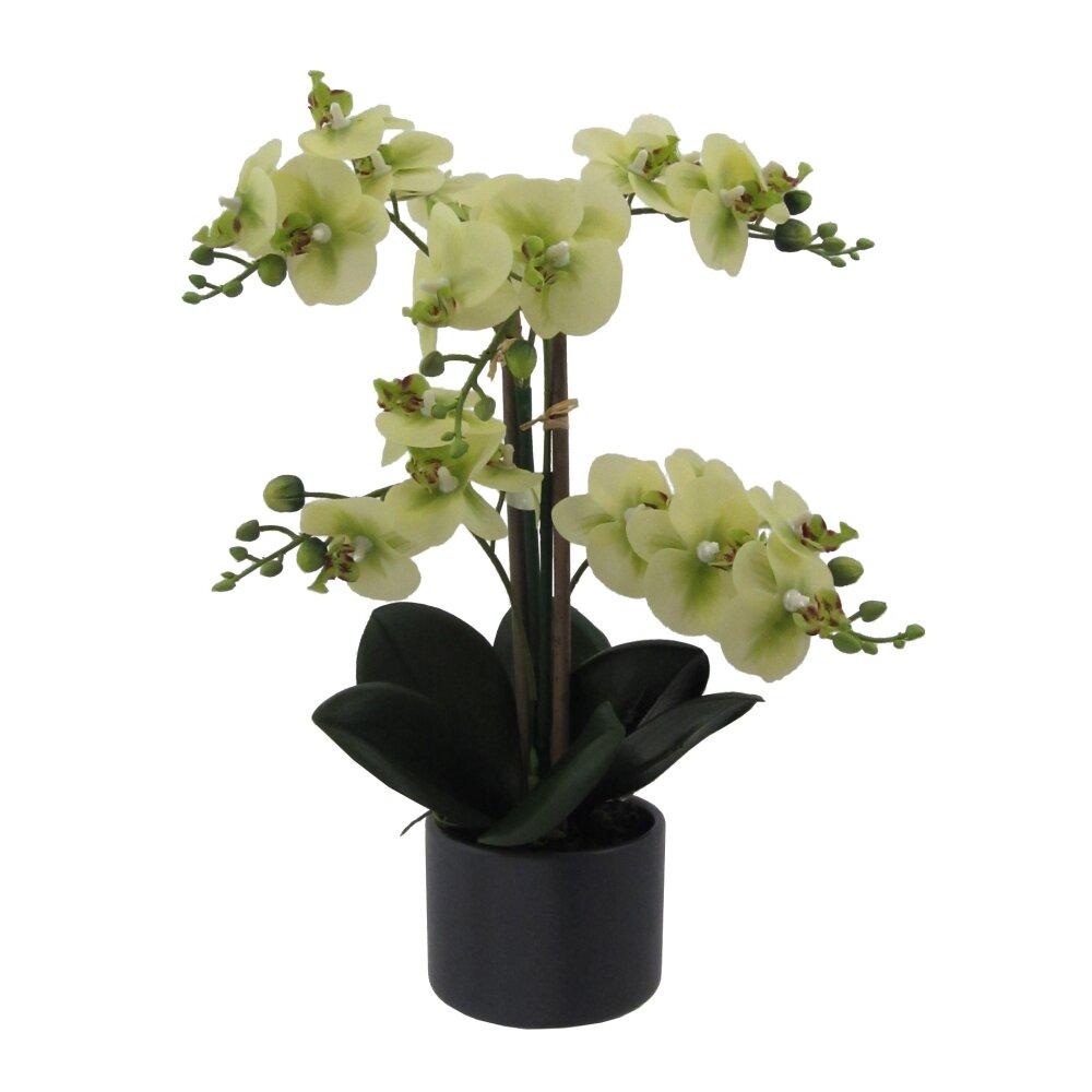 kunstpflanze phalenopsis gr n h he ca 38 cm. Black Bedroom Furniture Sets. Home Design Ideas