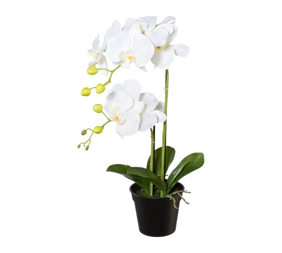kunstpflanze phalenopsis lila 50 cm mit vase. Black Bedroom Furniture Sets. Home Design Ideas