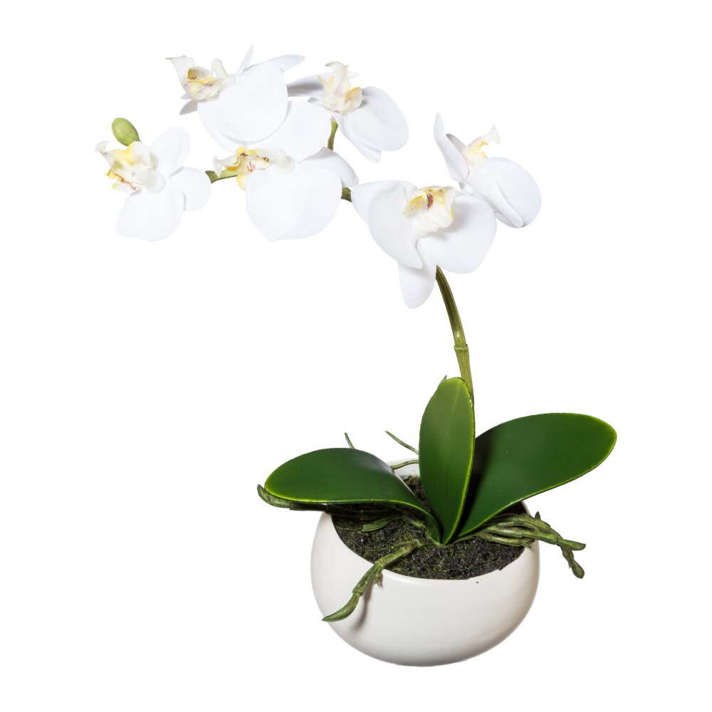 kunstpflanze phalenopsis wei 23 cm mit schale. Black Bedroom Furniture Sets. Home Design Ideas