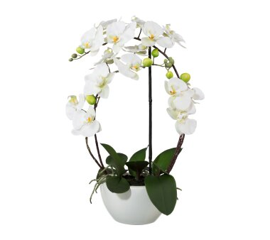 Kunstpflanze Phalenopsis (Orchidee) 3D-Print, Farbe...