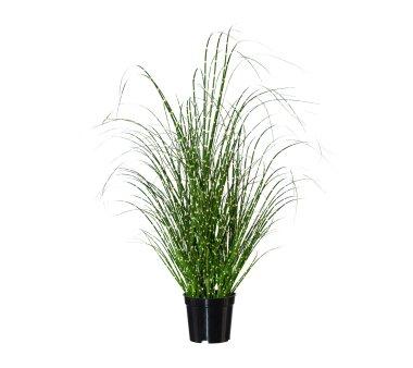 Kunstpflanze Miscanthus Zebrinus, Farbe grün, inkl....