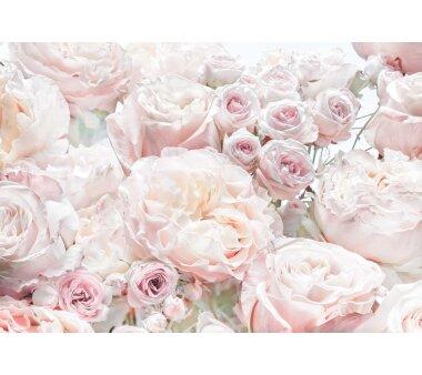 Fototapete KOMAR SPRING ROSES, 8 Teile, BxH 368 x 254  cm