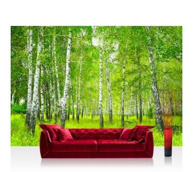 Vlies Fototapete no. 112   Sunny Birch Forest Wald Tapete...