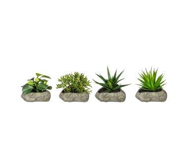 Kunstpflanzen Sukkulenten-Mix, 4-fach sortiert, im...
