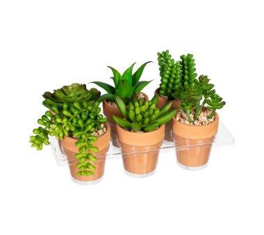 Kunstpflanzen Mini-Sukkulenten-Mix grün, 6-fach...