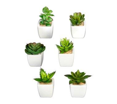 Kunstpflanzen Mini-Sukkulenten grün, 6-fach...