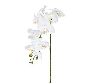 Kunstblume Phalenopsis (Orchidee), 3er Set, Farbe creme,...