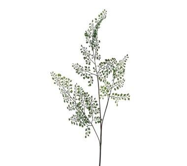 Kunstpflanze Adianthumzweig, 4er Set, Farbe grün,...