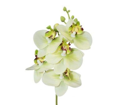 Kunstblume Miniphalenopsis, 5er Set, Farbe grün,...