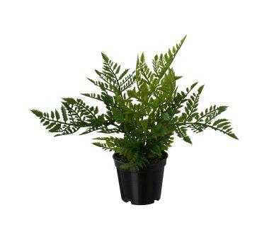 Kunstpflanze Farn, 3er Set, Farbe grün, inkl. Topf,...