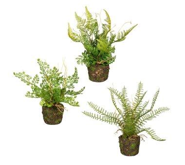 Kunstpflanze Farn, 3-fach sortiert, mit Erdballen,...