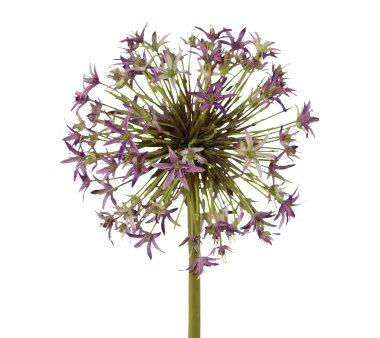 Kunstblume Allium, lila, Höhe ca. 43 cm