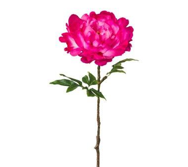 Kunstblume Peonie, 2er Set, cerise, Höhe ca. 66 cm
