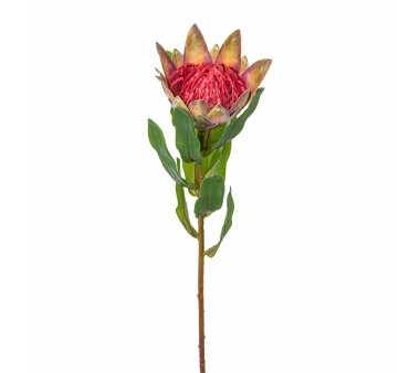 Kunstblume Protea, 3er Set, grün-rosa, Höhe ca....