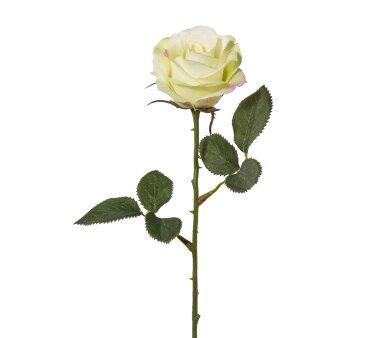 Kunstblume Rose, 7er Set, grün, Höhe ca. 36 cm