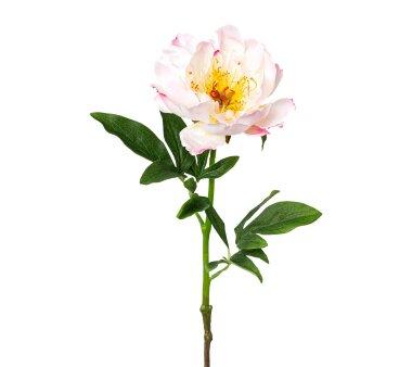 Kunstblume Peonie, 3er Set, rosa, Höhe ca. 51 cm