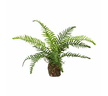Kunstpflanze Farn, 2er Set, grün, im Ballen,...