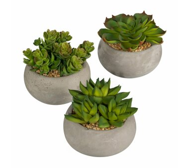 Kunstpflanze Sukkulenten, 3er Set, grün, inklusive...