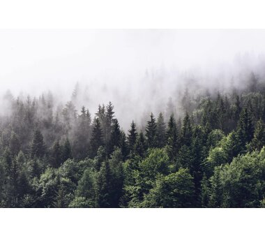 AS Creation Vlies-Fototapete FOGGY FOREST 119016, 8...