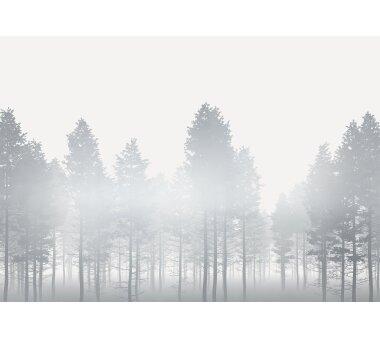 Vlies-Fototapete KOMAR, RAW SILVER HAZE, 4 Teile, BxH 400...