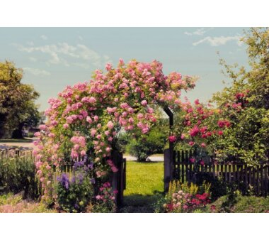 Fototapete KOMAR, ROSE GARDEN, 8 Teile, BxH 368 x 254 cm