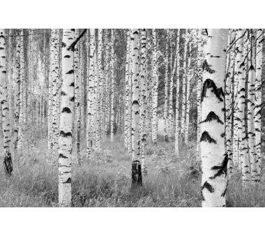 Vlies Fototapete KOMAR, WOODS, 4 Teile, BxH 368 x 248 cm