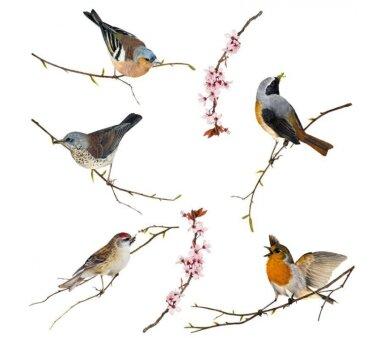 Fenstersticker KOMAR, BIRDS, 12 Teile, BxH 31 x 31 cm